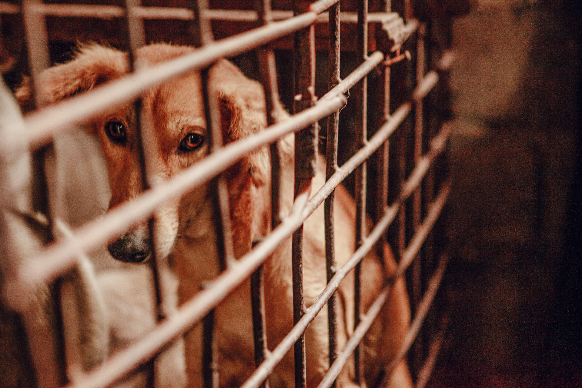 Sad dog in a cage