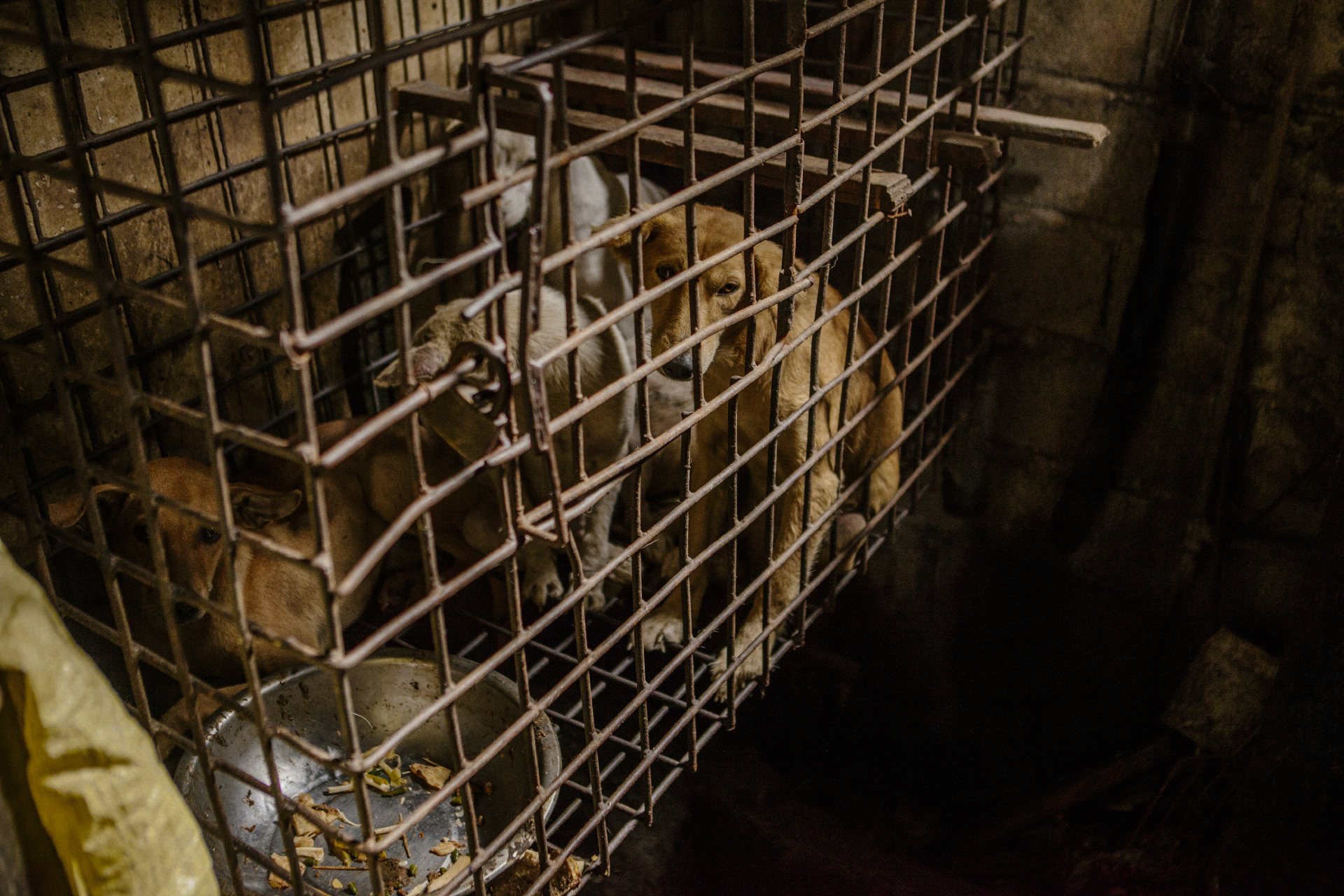 Dog meat trade in mountain province